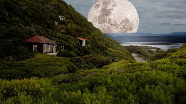 Показали растение на обратной стороне Луны