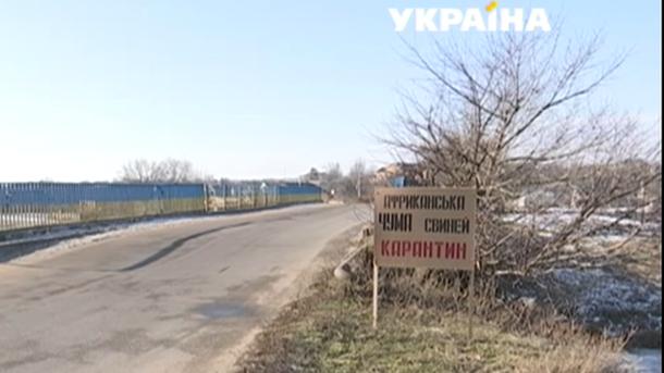 Вспышка чумы свиней в Днепропетровской области: объявлен карантин