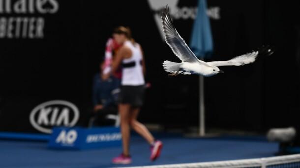 Помет чаек стал причиной самого позднего начала матча в истории Australian Open
