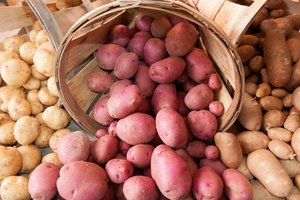 How to prepare for planting potatoes and yield