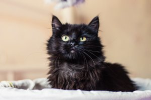 Find a friend: affectionate feline Matilda is looking for a home