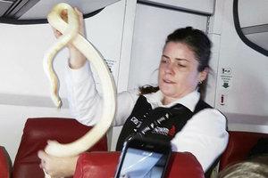 The brave flight attendant caught a snake in a passenger plane