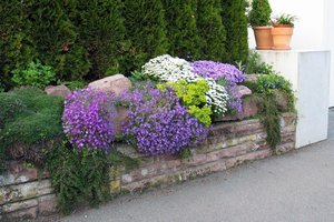 How to decorate a garden plot or cottage by a hedge and for her then to care