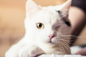 Find a friend: two special kitten looking for a caring owner