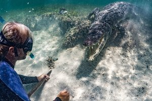 Tourists took video of her swimming with crocodiles
