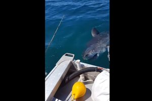 Big shark scared the angler in New Zealand