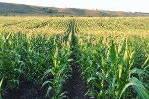 Украина готовится кормить Кению