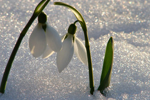 Украинцев ждет резкое похолодание и снег: прогноз погоды на неделю