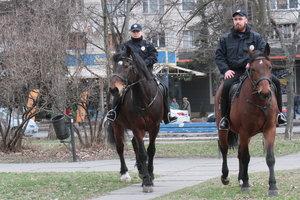 Подробности инцидента с лошадью и женщиной в Киеве: коня напугала огромная собака