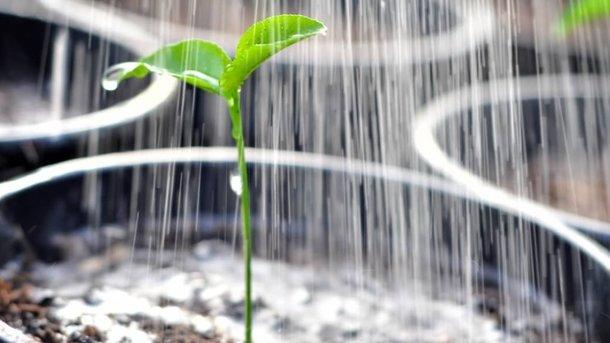 Сильные и здоровые. Основы закладываются в рассадный период выращивания овощей