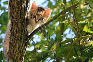 Ученые выяснили настоящее отношение кошек к людям