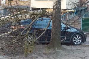 В Киеве рухнувшее дерево раздавило машину