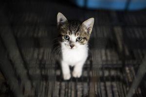 Одессу зачищают от бездомных животных перед открытием сезона