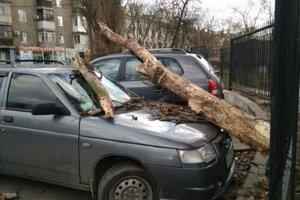 В Харькове сильный ветер повалил деревья и дорожные знаки