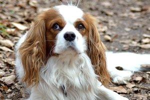 Как домашние животные помогают справиться с унынием и стрессом