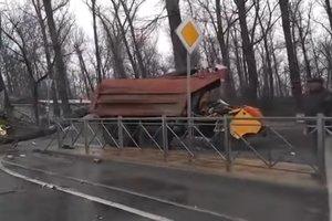 В России рухнувшее дерево убило водителя КамАЗа и пассажира