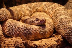 Двухлетняя девочка случайно сфотографировалась с ядовитой змеей