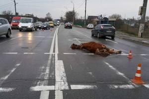 В Киеве машина насмерть сбила лошадь