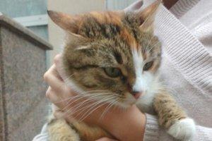 """Найди друга: кошка сайта """"Сегодня"""" ищет новый дом и добрых хозяев"""