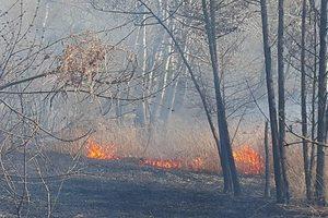 В Киеве начался масштабный пожар: горит сухая трава на Совских прудах