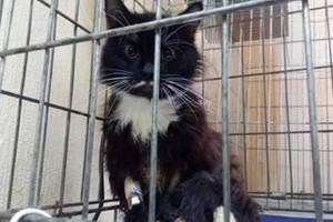 Подробности истории с ранеными в Киеве котами: животных избивали ногами или сбили машиной
