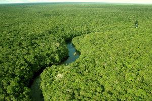 Речные заторы стремительно уничтожают джунгли Амазонки