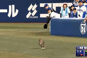 Бейсбольный матч прервали из-за кота