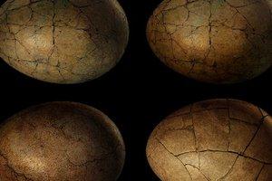 В Китае нашли пять окаменелых яиц динозавра