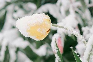 Апрель разбушевался: в Одесскую область вернулась зима