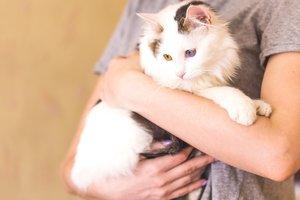Найди друга: смышленый кот Пушкин ищет дом