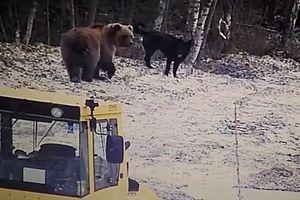 Видеохит: дружба пса и молодого медведя покорила интернет