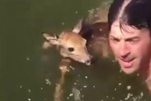 Видеохит: мужчина прыгнул в воду, чтобы спасти олененка