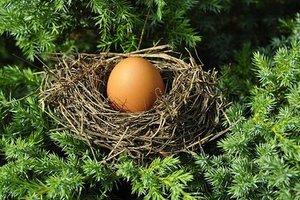 Французский художник на камеру высиживает яйца