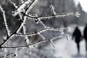 Как непогода повлияет на урожай в Украине: прогноз Минагропрода