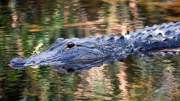 Крокодилы съели охотника из ЮАР