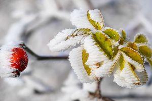 Снегопад уничтожил сотни растений в ботаническом саду Днепра