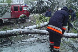 В Одессе упавшее дерево разрушило каменный забор и повредило провода
