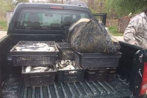В Одесской области браконьеры под видом ученых незаконно ловили рыбу