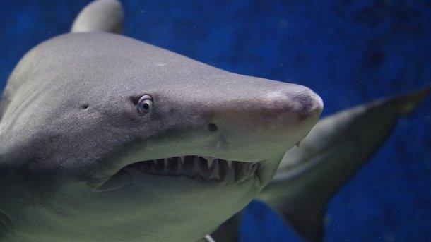 Акула напала наженщину впроцессе отдыха набританском острове Вознесения