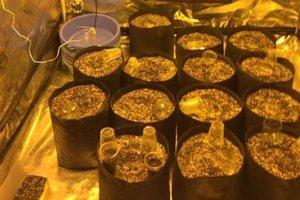 У киевлянина в Одессе нашли пять килограммов каннабиса