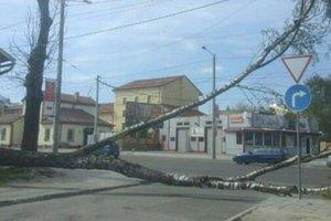 Во Львове на школьницу упало дерево