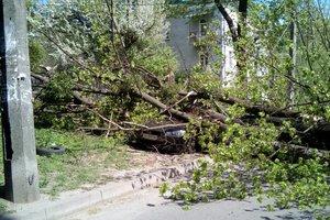 В Киеве ветер повалил два дерева