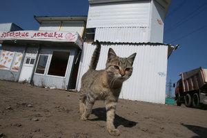 В Киеве перестанут отлавливать бездомных котов