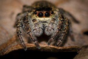 Гигантский паук до смерти напугал американского телеведущего