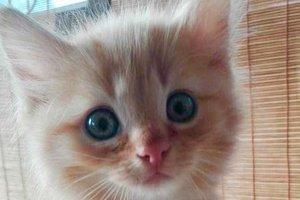 Найди друга: персиковый котенок ищет семью