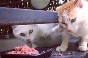 Видеохит: Фейсбук взорвал жадный кот