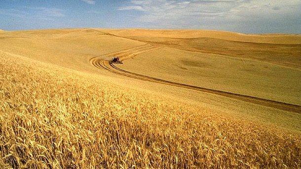 ВЕвропарламенте против поднятия квот наукраинскую пшеницу итоматы