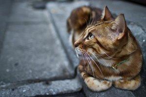 Одесситы необычным способом собирают деньги для бездомных котов