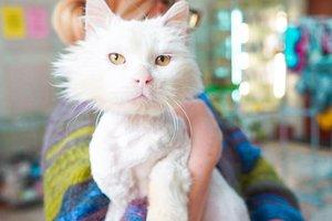 Найди друга: белоснежный кот Лева ищет семью