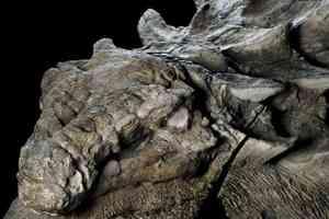 """В Канаде ученые показали отлично сохранившуюся """"мумию"""" динозавра"""